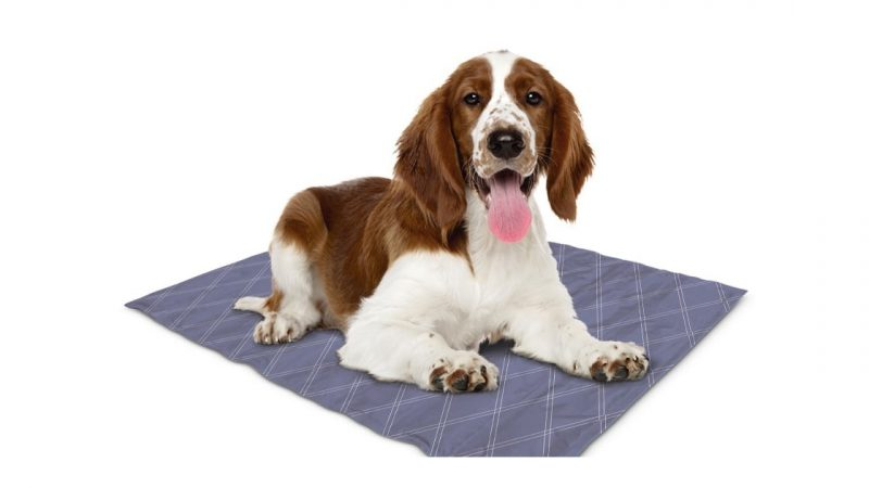 The Significance Of Waterproof Dog Mat