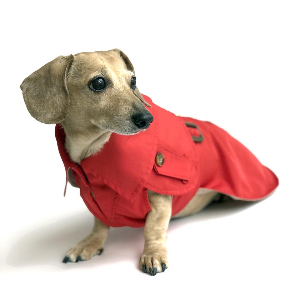 Thorough Analysis On The Dachshund Dog Coat
